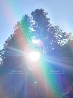 木の合間からパワーが漲る太陽☀の写真・画像素材[2648101]