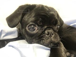 犬を閉じるの写真・画像素材[2701681]