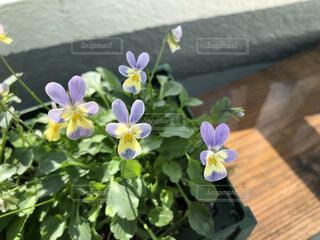 かわいい草花の日光浴の写真・画像素材[4937082]