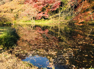 森を流れる川の写真・画像素材[2515492]