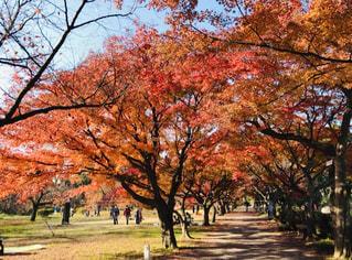 公園の大きな木の写真・画像素材[2515507]