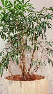 観葉植物フォトの写真・画像素材[2723532]