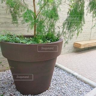 庭の植物の写真・画像素材[2726733]