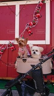 クリスマスフォトの写真・画像素材[2862810]