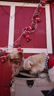 クリスマスフォトの写真・画像素材[2862845]