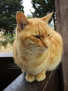 猫,動物,屋外,ベンチ,オレンジ,樹木,ペット,人物,ゆったり,くつろぎ,ネコ