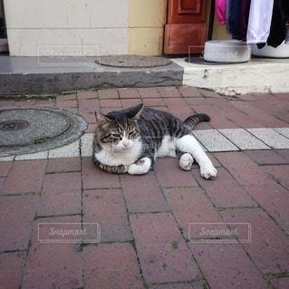 猫,動物,屋外,かわいい,景色,ペット,人物,道,歩道,地面,のんびり,まったり,ゆったり,ネコ