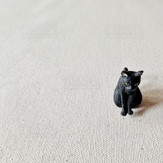 かしこまった黒猫の写真・画像素材[2985445]