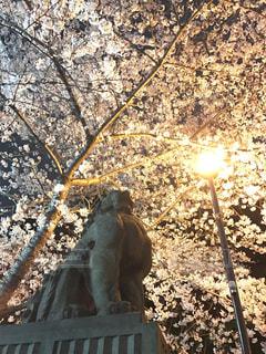 春 - No.415076