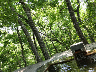 木の隣に座っている木製のベンチ - No.753743