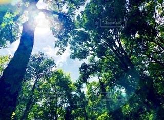 森林の写真・画像素材[2623731]