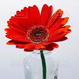 赤い花の上に座っている花で満たされた花瓶の写真・画像素材[2725442]