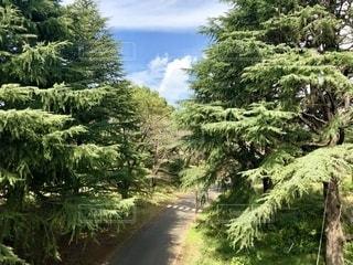 森の中の木の写真・画像素材[2792059]