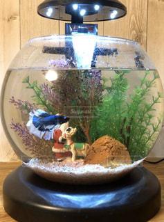 水槽の中の熱帯魚の写真・画像素材[2925379]