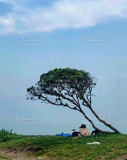 木の下に寝転ぶカップルの写真・画像素材[2925383]
