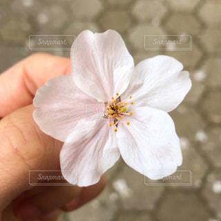 花を持つ手の写真・画像素材[2926020]