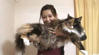 女性,猫,動物,大きい,人,可愛い,モフモフ,メインクーン,重い,大型猫