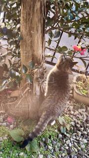 猫,動物,庭,屋外,椿,ペット,子猫,人物,ネコ