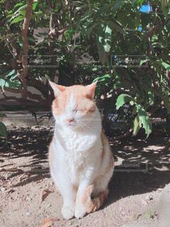 猫,動物,ペット,人物,江ノ島,日向ぼっこ,ネコ