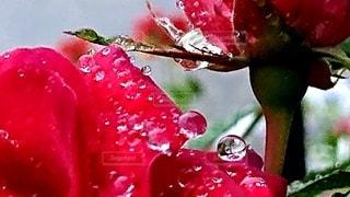 雨上がりの写真・画像素材[2611850]