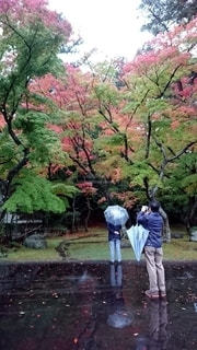雨模様の紅葉の写真・画像素材[2617221]