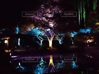 夜の木々の写真・画像素材[2625408]