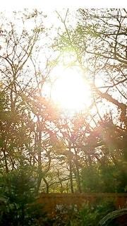 紅葉の間からまばゆい光の写真・画像素材[2663360]