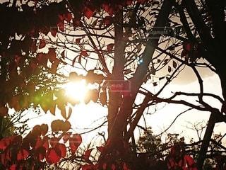 どこか知らない森に迷いこんだような錯覚におちいる風景の写真・画像素材[2681427]