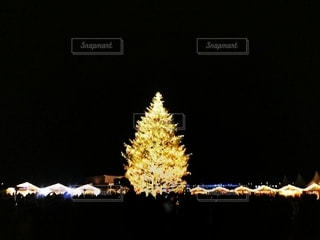 横浜のクリスマスツリーの写真・画像素材[2783701]