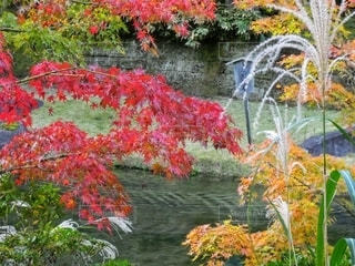 鎌倉、円覚寺の紅葉の写真・画像素材[2792374]
