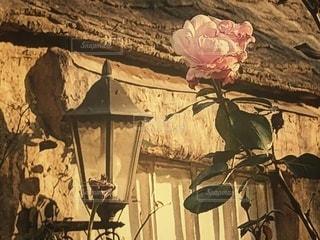 季節終わりのバラと古い建物の写真・画像素材[2906973]