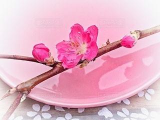 皿の上の梅の花の写真・画像素材[3014440]