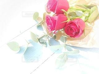 花のクローズアップの写真・画像素材[3339583]
