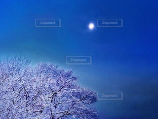 白く輝く木々と月の風景の写真・画像素材[3377322]