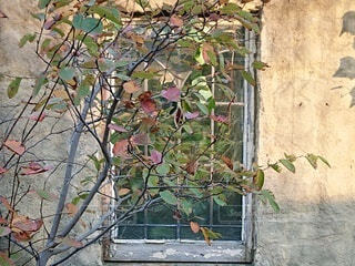 レトロな窓の写真・画像素材[3714856]