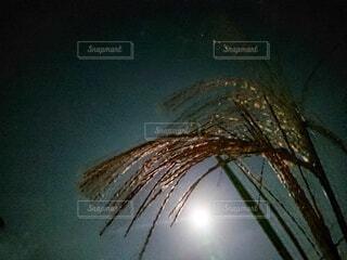 中秋の名月の写真・画像素材[3737091]
