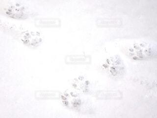 猫の足跡の写真・画像素材[4137427]