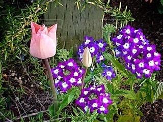 春の庭の写真・画像素材[4333767]