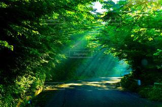 森林の写真・画像素材[169268]