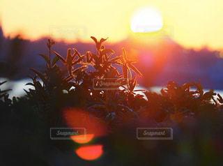 空,太陽,光,ぼかし,フレア,初日の出,草木,ぼけ,ぼやける