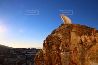 モロッコの猫の写真・画像素材[2970906]