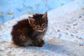 モロッコの猫の写真・画像素材[2970886]
