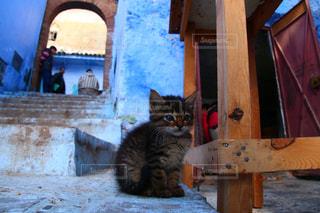 モロッコの猫の写真・画像素材[2970890]