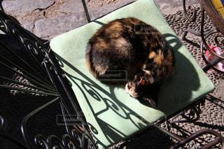モロッコの猫の写真・画像素材[2970889]