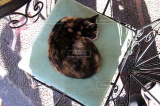 モロッコの猫の写真・画像素材[2970888]