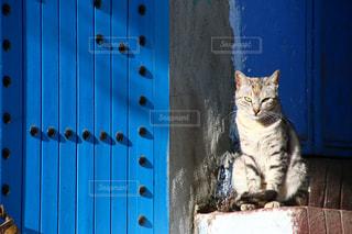 モロッコの猫の写真・画像素材[2970891]