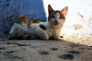 モロッコの猫の写真・画像素材[2970892]
