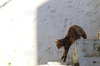 モロッコの猫の写真・画像素材[2970893]