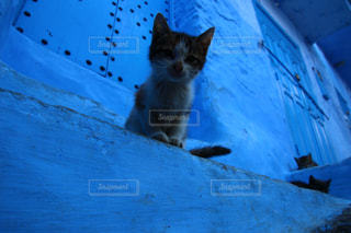 モロッコの猫の写真・画像素材[2970894]
