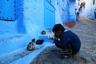 モロッコの猫の写真・画像素材[2970905]